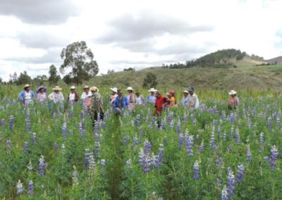 Desarrollo de biofungicidas y promotores de crecimiento para cultivos andinos