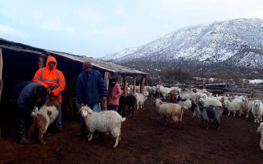 Controles ambientales en la Patagonia