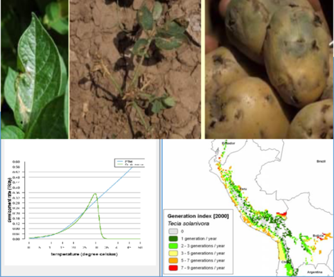 Herramienta para predecir el crecimiento de poblaciones de plagas en diferentes agroecosistemas de papa