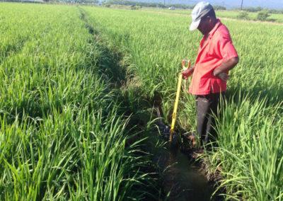 Mejoramiento del manejo integrado del cultivo de arroz para el control de CAHB