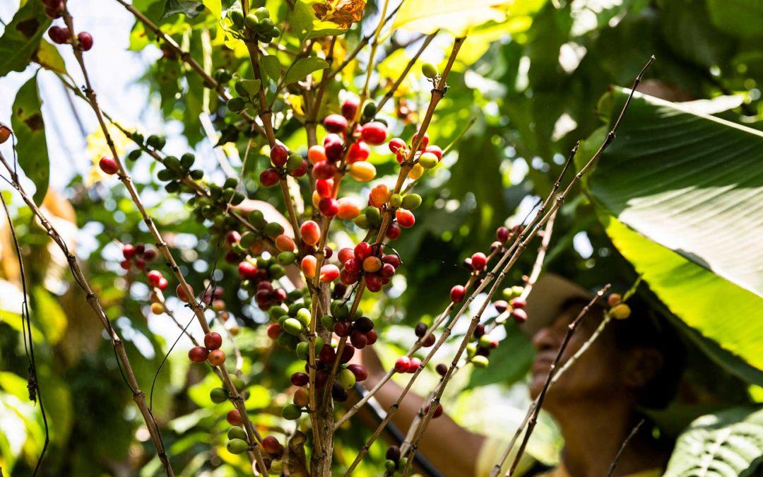 Factores de éxito para la comercialización de productos agropecuarios