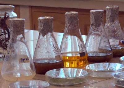 Desarrollo de bioestimulantes para cultivos andinos