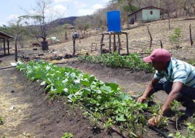 Cultivos agroecológicos para familias del Corredor Seco Centroamericano