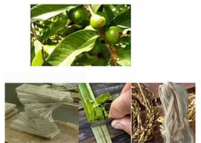 Residuos lignocelulósicos de frutas para biocompuestos o biocatalizadores