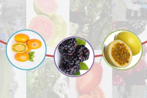 Protocolos para la elaboración industrial de snacks y barras de frutas