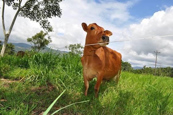 Herramienta virtual para mejorar la toma de decisiones sobre la intensidad de pastoreo
