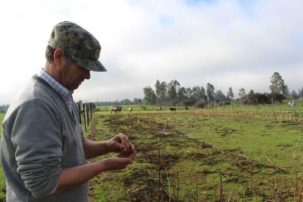 Modelo integrado de conservación, producción y oferta de semillas tradicionales