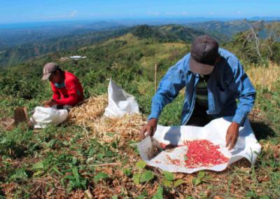 Frijol rico en hierro para la agricultura familiar de América Latina y El Caribe